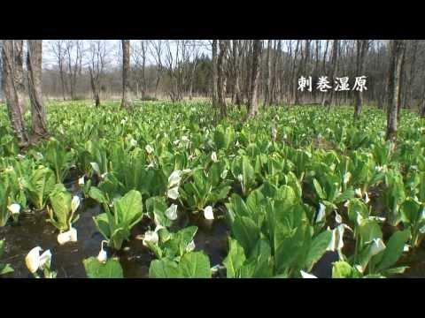 【HD】秋田県 田沢湖と刺巻湿原 – がんばれ東北!