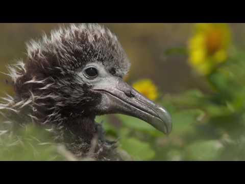 2017 Telluride Mountainfilm Intro by Leland Burchmore (видео)