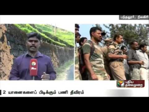 Live-report-Efforts-continue-on-third-day-to-trap-two-wild-elephants-in-Nilgiri