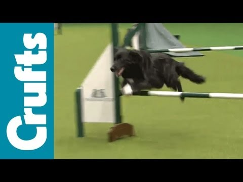 agility - Agility for Rescued Dogs.