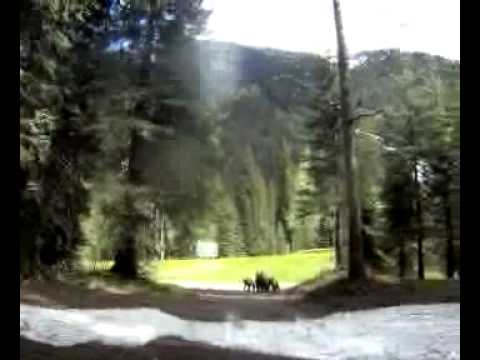 Charged by a grizzly in Banff