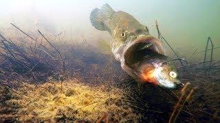 Video Underwater Video! Do Bass Eat Bluegill Swimbaits? MP3, 3GP, MP4, WEBM, AVI, FLV Oktober 2018