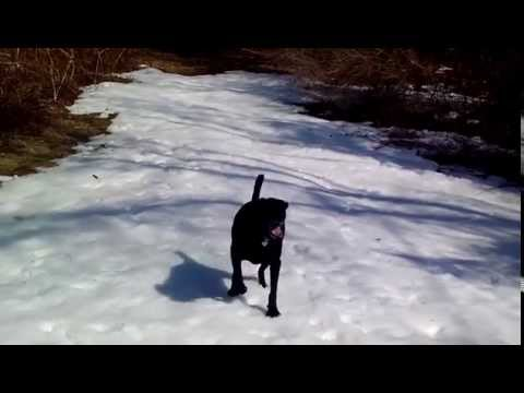 Check out this Dog SLIDING on the Snow