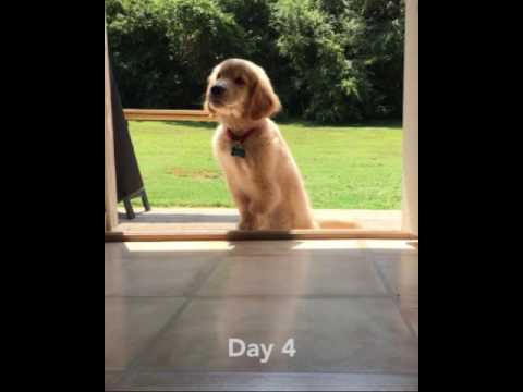 Fluffy 3legged Puppy Conquers Doorway Challenge