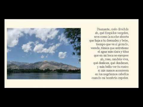 15 poemas de amor
