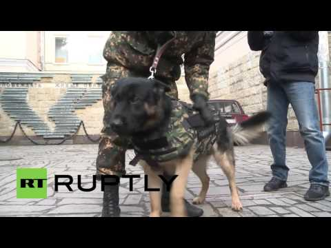 Russia Unveils Its Body Armour For Dogs After The Death Of Police Hound In Paris