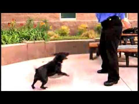 Most dog bad behavior based in fear