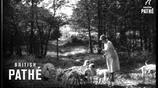 Heckfield United Kingdom  city images : Dalmatians - Filmed At Heckfield Hants (1933)