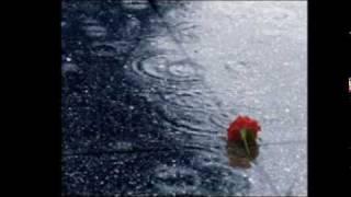 Đêm qua chưa ma trời sao vội sáng!Một đàn chim nói nhỏ chở mùa sang.trời vào thu tiễn em sầu lạnh giá.lá trên cành từng chiếc cuối bay xa.Đêm chia ly buồn gì sao chẳng nói.chỉ nghe em nói nhỏ trở về thôi.Ngày buồn tênh cũng đưa chiều vào tối.Mim môi cười mà nhớ thương không nguôi.Mộng về một đêm xuân sang em thì thầm ngày đó thương anh.Thuyền về một đêm trăng thanh say mộng vang đậu bến sông xanh.mộng tràn ngập đêm trăng sao,sao đầy trởi từng chiếc lấp lánh,rồi một chiều xuân thơ trinh cho lòng mình về với di vãng.Xa nhau chưa mà lòng nghe quạnh vắng.Đường thênh thang gió lộng một minh ta.Rượu cạn ly uống say lòng còn giá.Lá trên cành một chiếc cuốn bay xa.