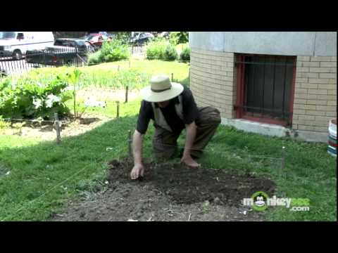 Video Vegetable Garden - How to Plant Seeds Outdoors download in MP3, 3GP, MP4, WEBM, AVI, FLV January 2017