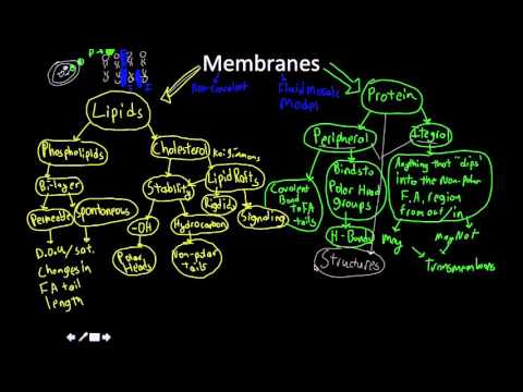 Cell membranes: lipids and proteins