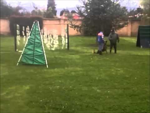 Entrenamiento perros de trabajo varias situaciones