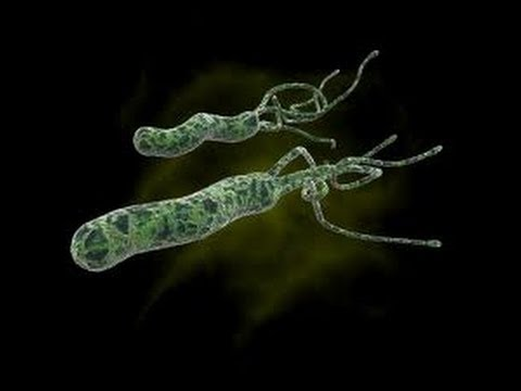 how to cure h pylori bacteria