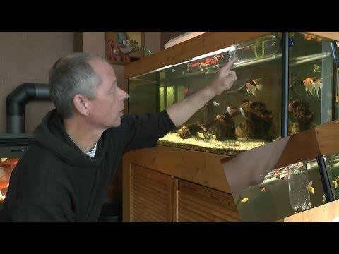 Aufzuchtbecken für Fischbabys selber bauen, ganz einfach und kostet fast gar nichts