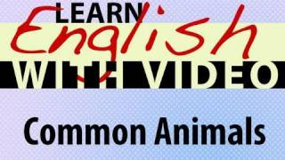 Common Animals Lesson