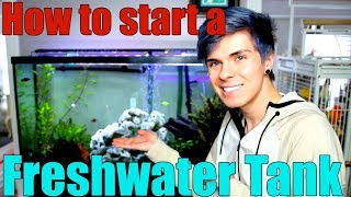 How to Start a Freshwater Aquarium | Everything You Need to Know by Tyler Rugge