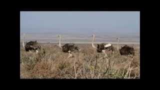Afrique du Sud : Le Parc National du Karoo (2/4)
