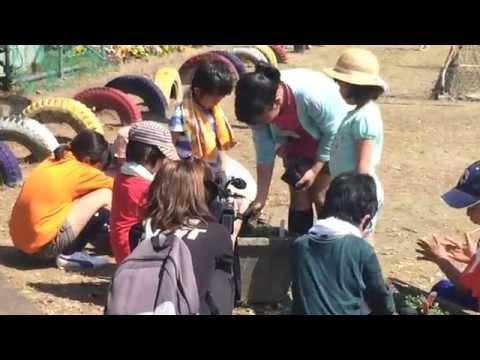 三条小学校で保護者、児童、地域が一体となった花植え