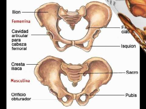 Los huesos  del cuerpo humano.mpg