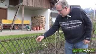 #1018 Wie schneide ich einen jungen Apfelbaum