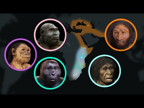 Seven Million Years of Human Evolution An Animated