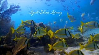 Video, Liquid Silence Listening