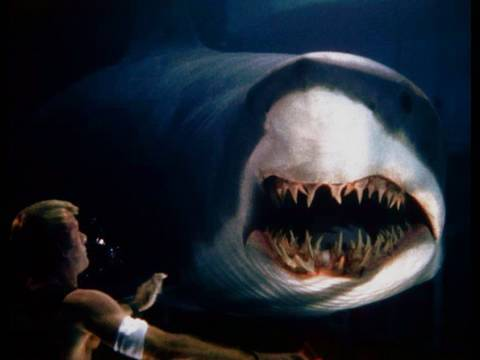 Great White Shark Accident ★★★★★