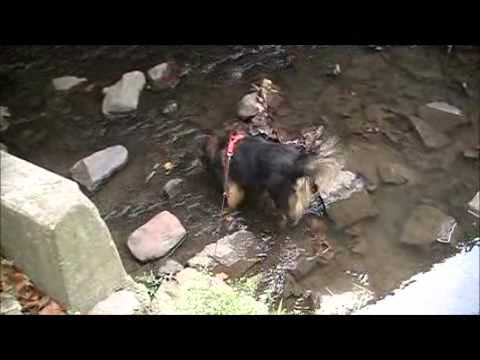 Visit to Riley Park, Greenfield Indiana, with my dogs. Part  1