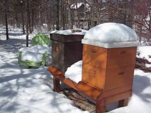 Backyard Beekeeping Part 21: Winter Inspection