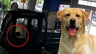 Video Anjing nyetir mobil nabrak toko HP hingga anjing pahlawan - Kompilasi MP3, 3GP, MP4, WEBM, AVI, FLV Desember 2018
