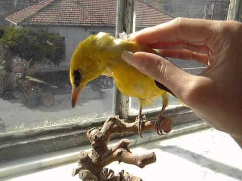 sayuri88's natural nails and the bird (video 14)