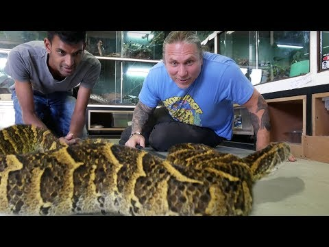 DEADLIEST SNAKES IN THE WORLD!!! NEW SNAKE UNBOXING! | BRIAN BARCZYK