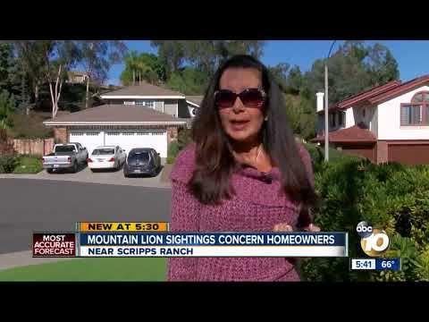 Homeowners worry about mountain lion sightings