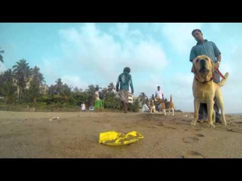 un povero cane randagio ci mostra com'è la sua vita, molto commovente!