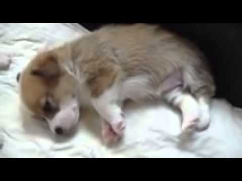 Cosmic Corgis Introduces - Georgia O