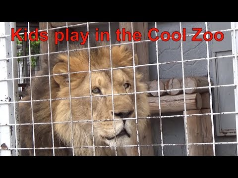 Funny Kids Playing At The Zoo And Feeds Animals Video For Kids