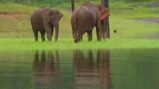 Idukki India  city photos gallery : Thekkady Wildlife Destination, Idukki, Kerala, India