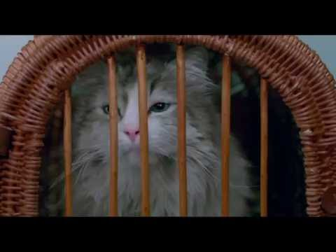 "MA VIE DE CHAT - Extrait ""Dans la peau d'un chat"" VOST [Kevin Spacey, Christopher Walken]"