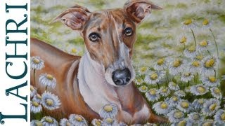 "Time Lapse ""Italian Greyhound"" speed painting in Oil over acrylic demonstration by Lachri"