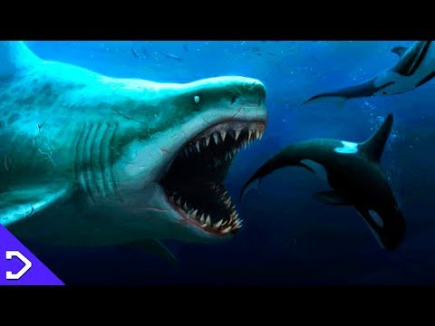 How MASSIVE Was The Megalodon!? - The MEG (2018)