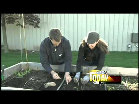 Growing Healthy: Planting Onions