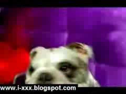 Dog Read Playboy