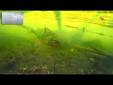 съемка клева под водой