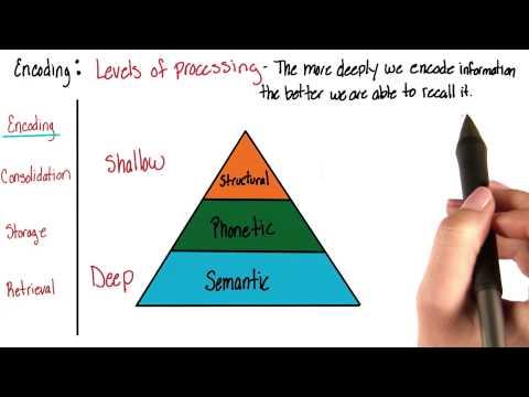 Encoding - Intro to Psychology