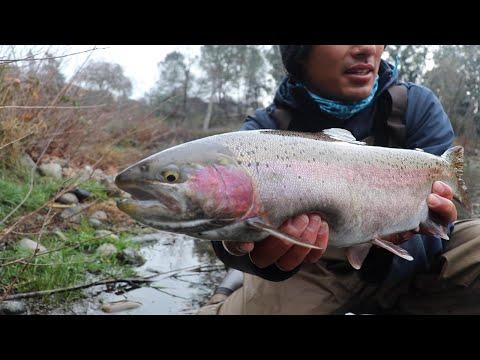 EPIC Steelhead Fishing on a Crystal Clear River
