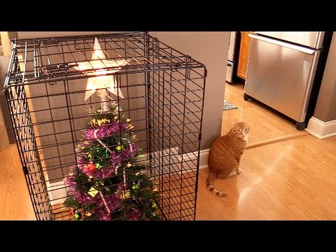 10 Ways To Survive Christmas With Cats