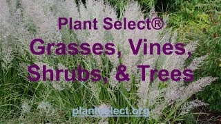 Learn about the winning ornamental grasses, vines, shrubs and trees from Plant Select® with Pat Hayward, Executive Director.
