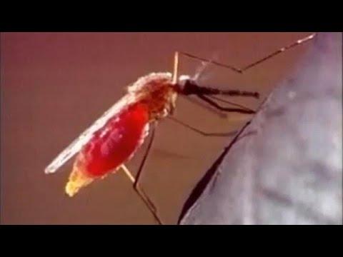 Δύο θύματα από τον ιό του Δυτικού Νείλου