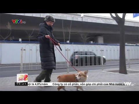Nuôi chó ở Trung Quốc: Đăng ký, quản lý như ô tô @ vcloz.com