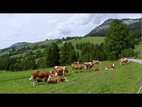 Verbandstag 2010: Region Ennstal